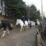 Springhill Farm Riding Stables Foto