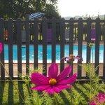 la piscine, avec ses transats et parasols