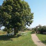 le magnifique tilleul qui se dresse dans le jardin, invite à venir se reposer à l'ombre