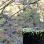 The fence and the moss