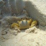 Siri na praia