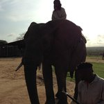 Elephant riding / Elephant schol/santuary
