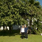 B&B Immersi nella natura's century old fig tress and younger hosts