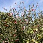 цветущий сад вокруг