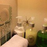 In bagno un simpatico amico...