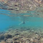 Snorkelling on the reef flat