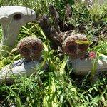 Sculptures dans le jardin