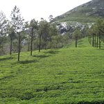 Munnar photo point