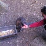 Un walabi. En étant très calme, il est possible de leur donner à manger dans la main.