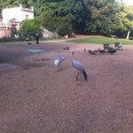 A l'entrée, de multiples oiseaux de toutes sortes, dans l'étang mais aussi sur le chemin.