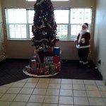 pretty tree in the lobby