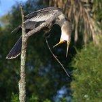 Esteros de Ibera  fauna