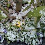 snowing in Dec in Victoria