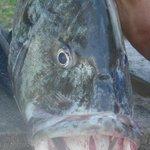 Fischfang - nach dem Fishing