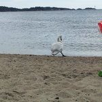 en vellykket dag på stranden.