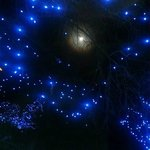 Full moon and Denver Zoo Lights 2013