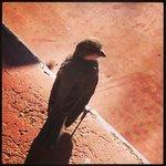 un visitante matutino  un  gorrión