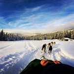 Dog sledding at sun peaks.  A must do!