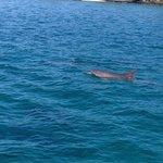 les dauphins avec Eric (Le Philo)