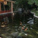 Wonder la Amusement park-Friendly fish