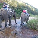local elephant back safari