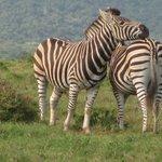 Local Safari reserve