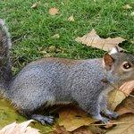 Gli scoiattoli di Hyde Park