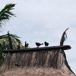 funny sculpture @ rooftop villa