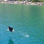 Fish eagle cruise!