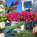 mooie bloemen pracht bij het zwembad