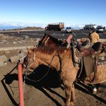 Horses on the Haleakala