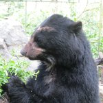 See their rescued bears (not the most exciting activity)