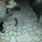 stray cats outside