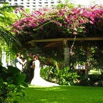 Wedding at plumeria garden