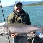31 Pound Chinook Salmon