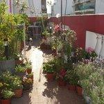 Casa Rosa: terrace garden