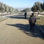 Camino de los viñedos