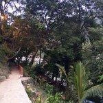 Pathway past Casa La Ventana- Beginning of trail to Colomita's Beach