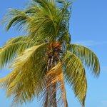 Lovely palms