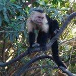 monkey friends at palo verde (land tour)