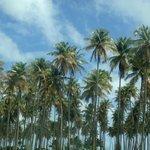 playa lucia palms
