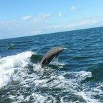 Dolphin!  (Photo by Captain Randy)