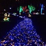 Festival of lightd