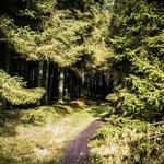 Forest Track at Llyn Brenig