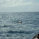 our boat approaching a whole school of dolphins!