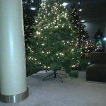 Hotel Xmas tree