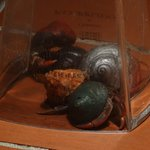 Crab racing