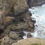Local Sea veiw