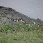 Happy Croc!