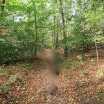 落ち葉と紅葉前の葉っぱが混じるトレイル